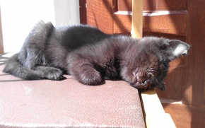 Picture the sun, stay, Kitty
