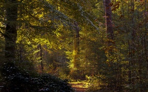 Picture forest, trees, Netherlands, path, the bushes, Utrecht, Baarn
