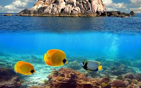 Picture ocean, water, fish, coral reef, underwater world