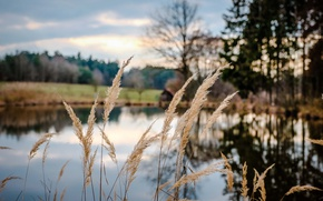 Picture grass, pool, trees, field, reflection, sunlight, countryside, farm, mirror, cloudy, woodland