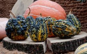 Picture autumn, widescreen, Wallpaper, harvest, pumpkin, pumpkin, wallpaper, widescreen, background, the Wallpapers, full screen, HD wallpapers, …
