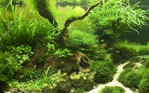 Picture fish, aquarium, plants