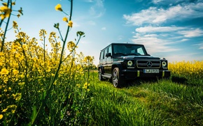 Picture Mercedes-Benz, Car, Sky, Grass, Front, Flowers, AMG, Black, Sun, Summer, G63