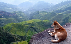 Picture landscape, mountains, view, dog