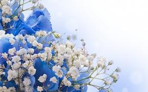 Wallpaper flowers, bouquet, white, blue