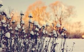 Picture winter, macro, snow, deadwood