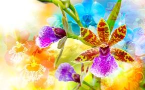 Picture glare, background, bright, orchids, colorful, closeup