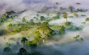 Picture forest, trees, fog, Malaysia, Sabah