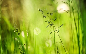 Picture greens, summer, grass, glare, meadow, a blade of grass, bokeh