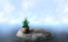 Picture water, clouds, plant, Stone, pot