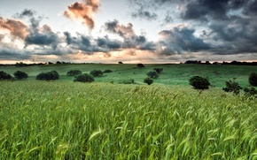Picture field, clouds, the evening, Italy, field, Italy, clouds, evening, Lazio, Lazio, Cerveteri, Cerveteri