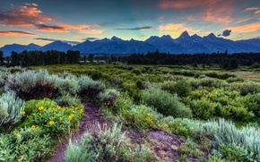 Picture forest, the sky, grass, clouds, trees, sunset, flowers, mountains, USA, Wyoming, Grand Teton National Park, …