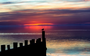 Picture the sky, landscape, night, bird