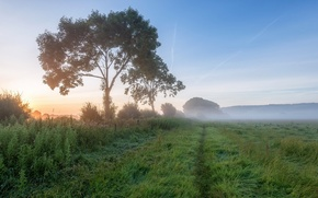 Picture field, landscape, fog, morning