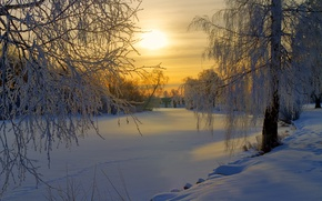 Picture winter, frost, forest, the sun, snow, trees, sunrise, glade, morning, Sweden
