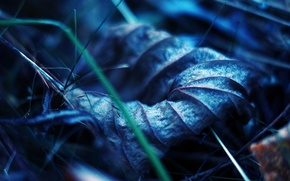 Picture autumn, grass, macro, sheet, earth, dry, veins