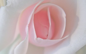Picture flower, pink
