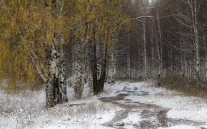 Picture road, autumn, snow, birch