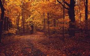 Picture road, autumn, forest, asphalt, leaves, trees, branches, nature, foliage, yellow, orange