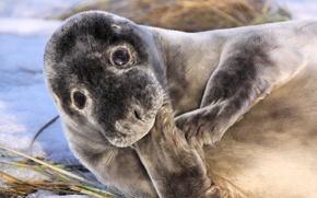 Picture look, lies, legs, seal