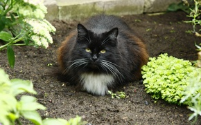 Picture cat, look, cats, the garden, in the village