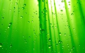 Wallpaper Background, Green, Drops