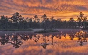 Picture trees, sunset, lake, reflection, Sweden, Sweden, Dawn, Knuthöjdsmossen Wetland