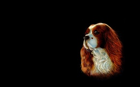 Picture background, dog, art, Spaniel