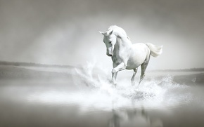 Picture water, squirt, river, shore, horse, running