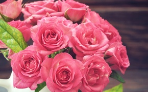 Picture roses, Pink, pink, Roses, color, Closeup