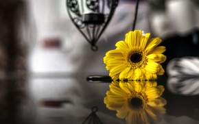 Wallpaper flowers, reflection, widescreen, black and white, HD wallpapers, Wallpaper, full screen, background, fullscreen, yellow, widescreen, ...