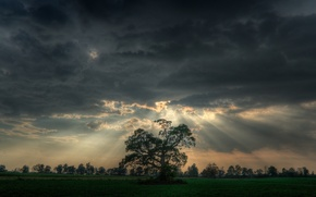Picture rays, clouds, tree