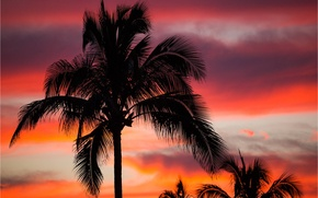 Picture the sky, clouds, night, tropics, Palma, silhouette, glow