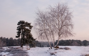 Picture winter, snow, trees, landscape, nature, birch, benches
