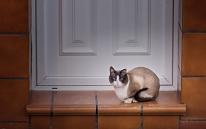 Picture cat, look, house