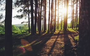 Picture forest, the sun, trees, sunset, nature, tree, path