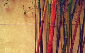Wallpaper wall, bamboo, different, color