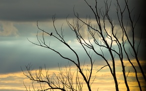 Picture the sky, clouds, sunset, branches, yellow, nature, background, blue, dove, village, silhouette, beautiful, Ukraine, dove