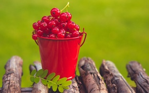 Picture summer, berries, red, currants, bucket