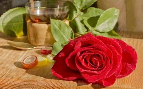 Picture rose, petals, red, marmalade