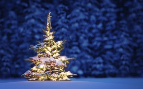 Picture winter, snow, trees, landscape, night, nature, Christmas, Christmas, New Year