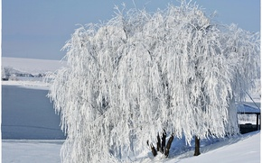 Picture snow, tree, Winter, frost, winter, snow, tree, frost