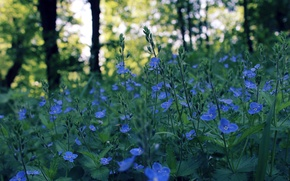 Picture field, flowers, glare, spring, the evening, blue, bokeh