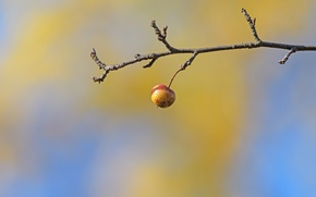 Picture background, Apple, branch