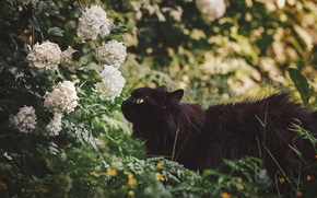 Picture flowers, nature, black cat, by Thunderi