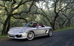 Wallpaper trees, silver, Porsche