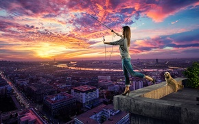 Picture roof, girl, the city, dog, search network