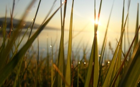 Picture grass, water, the sun, lake, pond