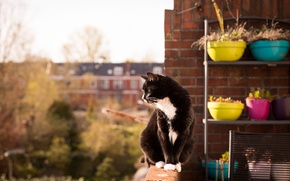 Picture cat, look, balcony, sitting