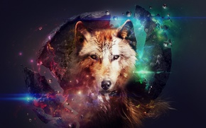 Picture space, ball, wolves